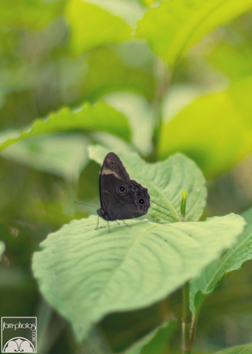 Nakasendo nature - Papillon